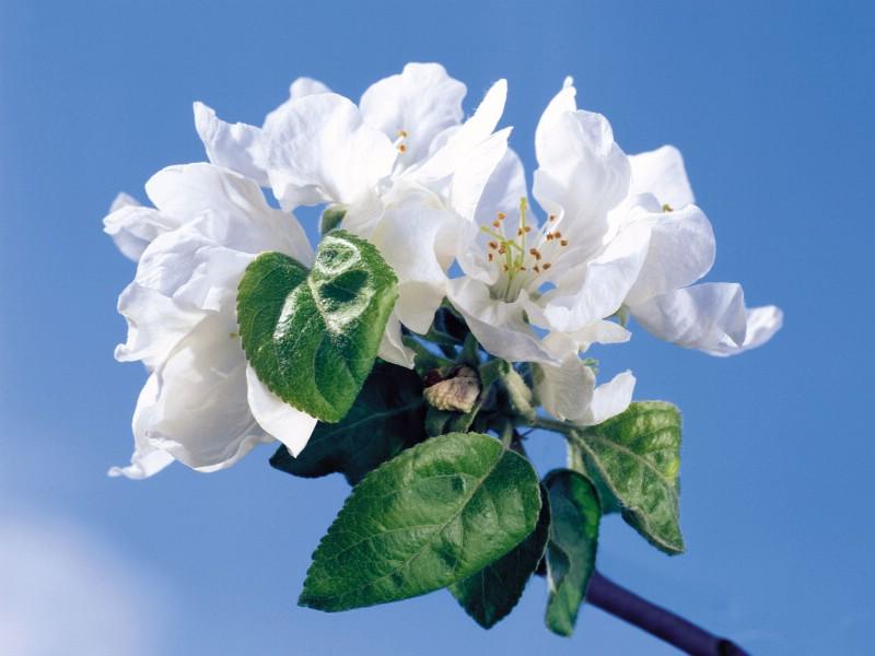 白色花朵 1 14壁纸 鲜花特写 白色花朵 第一辑壁纸 鲜花特写 白色花朵 第一辑图片 鲜花特写 白色花朵 第一辑素材 花卉壁纸 花卉图库 花卉图片素材桌面壁纸
