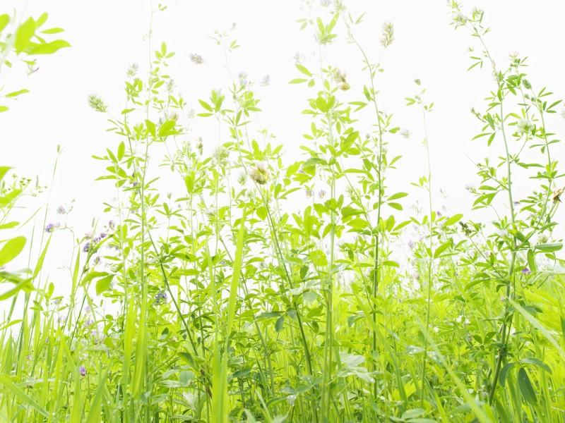 绿色草地 1 13壁纸 植物绿叶 绿色草地 第一辑壁纸 植物绿叶 绿色草地 第一辑图片 植物绿叶 绿色草地 第一辑素材 花卉壁纸 花卉图库 花卉图片素材桌面壁纸