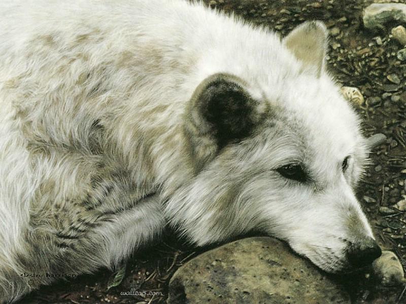 触动心灵的动物绘画 lesley