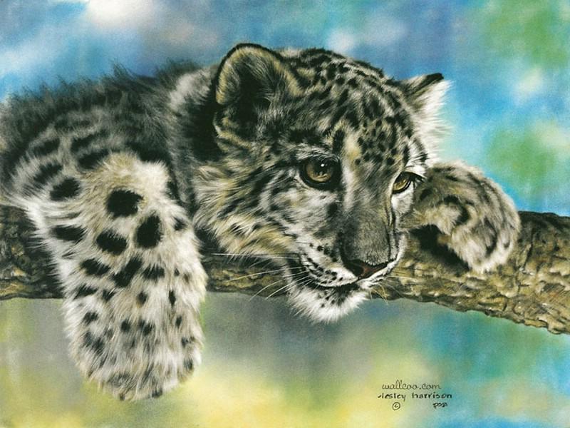 >> 彩铅手绘动物插画图片  动漫手绘的流程是不是自动铅笔打稿,针管笔