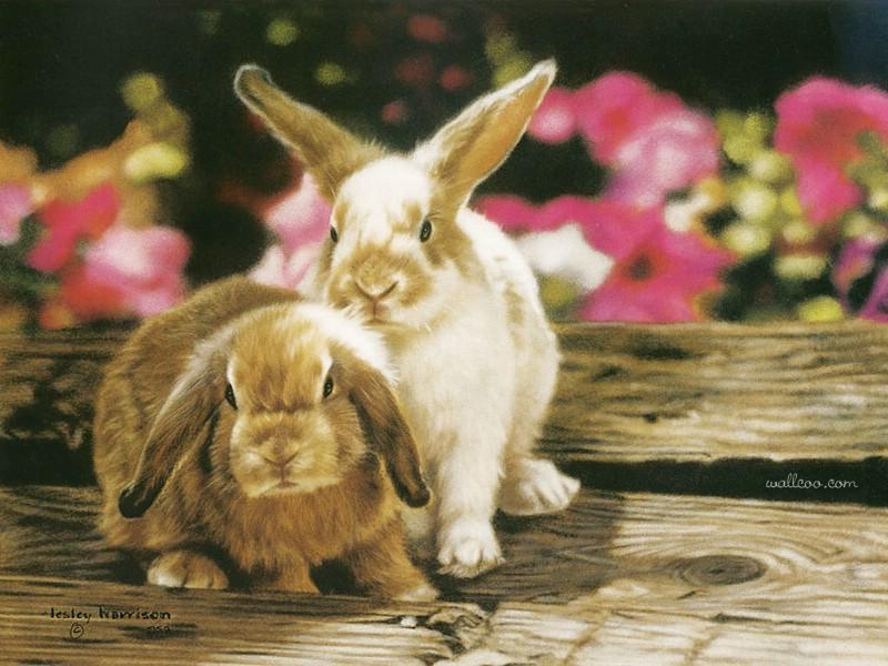 触动心灵的动物绘画 lesley harrison 手绘动物作