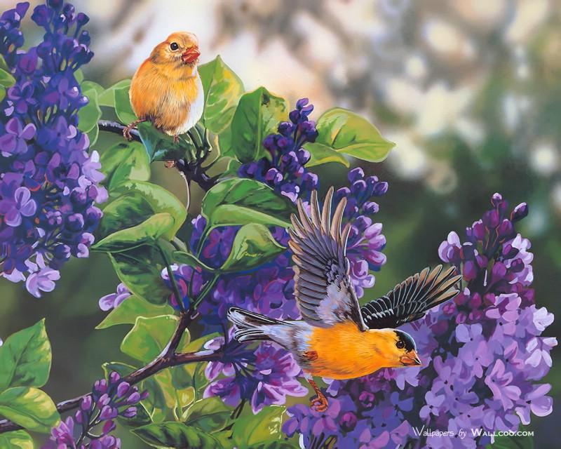 描述鸟语花香