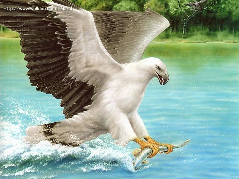 老鹰简笔画彩色 动物