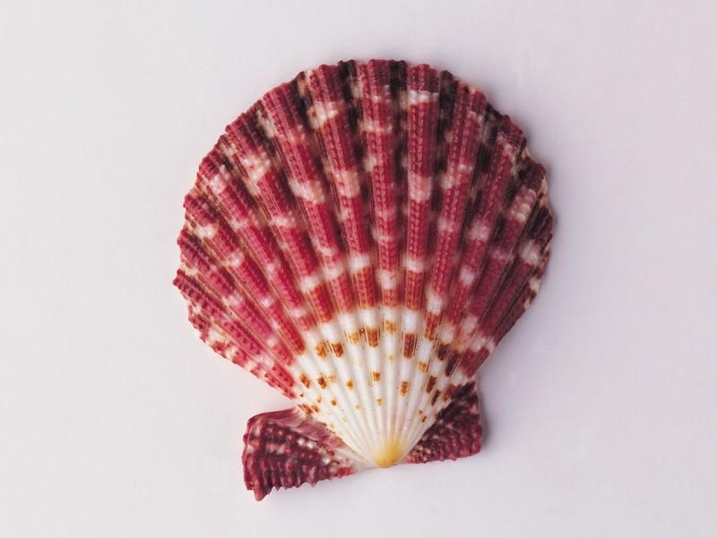 沙滩上美丽的贝壳珍珠高清图片 素材中国16素材网
