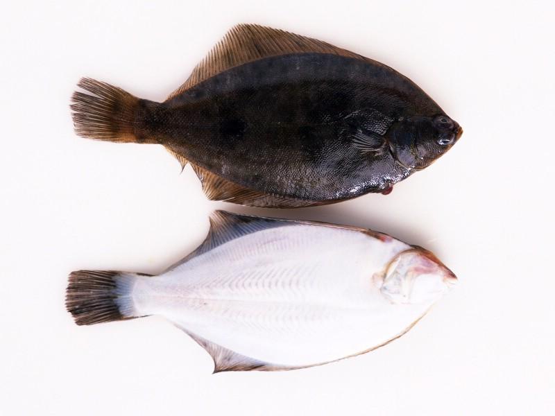 海鲜美食 5 6壁纸 海鲜美食壁纸 海鲜美食图片 海鲜美食素材 美食壁纸 美食图库 美食图片素材桌面壁纸