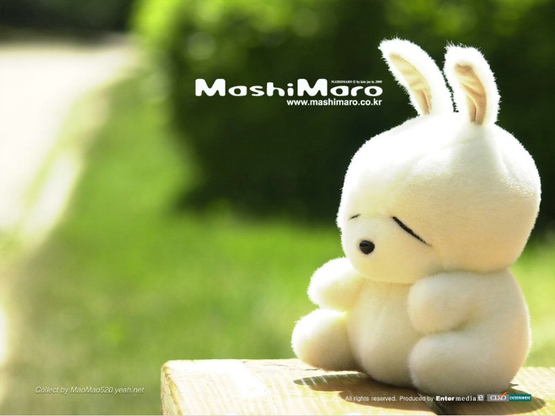 mashimaro wallpaper. toy,mashimaro Wallpapers