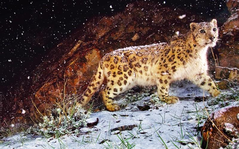 Snow Leopard自带 1 13壁纸 Apple Snow Leopard自带 第一辑壁纸 Apple Snow Leopard自带 第一辑图片 Apple Snow Leopard自带 第一辑素材 系统壁纸 系统图库 系统图片素材桌面壁纸