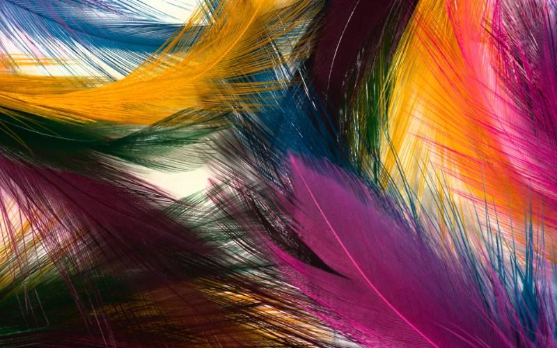 彩色羽毛和翅膀宽屏壁纸 1920x1200 壁纸1壁纸 彩色羽毛和翅膀宽屏壁壁纸 彩色羽毛和翅膀宽屏壁图片 彩色羽毛和翅膀宽屏壁素材 系统壁纸 系统图库 系统图片素材桌面壁纸