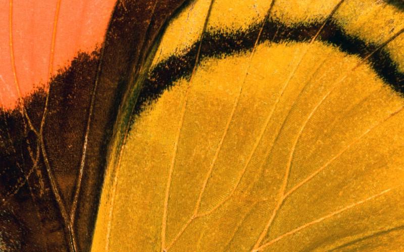 彩色羽毛和翅膀宽屏壁纸 1920x1200 壁纸3壁纸 彩色羽毛和翅膀宽屏壁壁纸 彩色羽毛和翅膀宽屏壁图片 彩色羽毛和翅膀宽屏壁素材 系统壁纸 系统图库 系统图片素材桌面壁纸