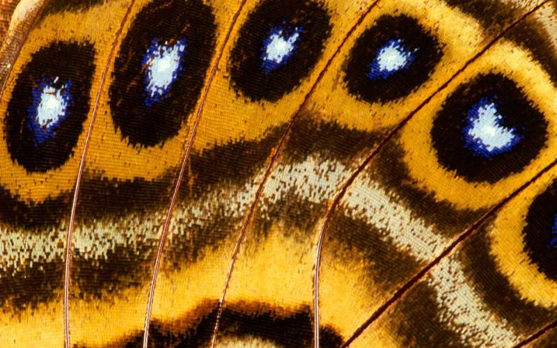 彩色羽毛和翅膀宽屏壁纸 1920x1200 壁纸4壁纸 彩色羽毛和翅膀宽屏壁壁纸 彩色羽毛和翅膀宽屏壁图片 彩色羽毛和翅膀宽屏壁素材 系统壁纸 系统图库 系统图片素材桌面壁纸