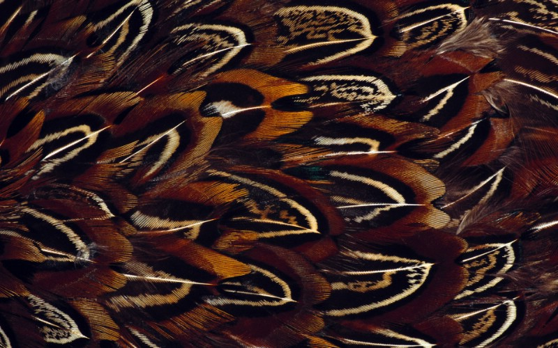 彩色羽毛和翅膀宽屏壁纸 1920x1200 壁纸5壁纸 彩色羽毛和翅膀宽屏壁壁纸 彩色羽毛和翅膀宽屏壁图片 彩色羽毛和翅膀宽屏壁素材 系统壁纸 系统图库 系统图片素材桌面壁纸