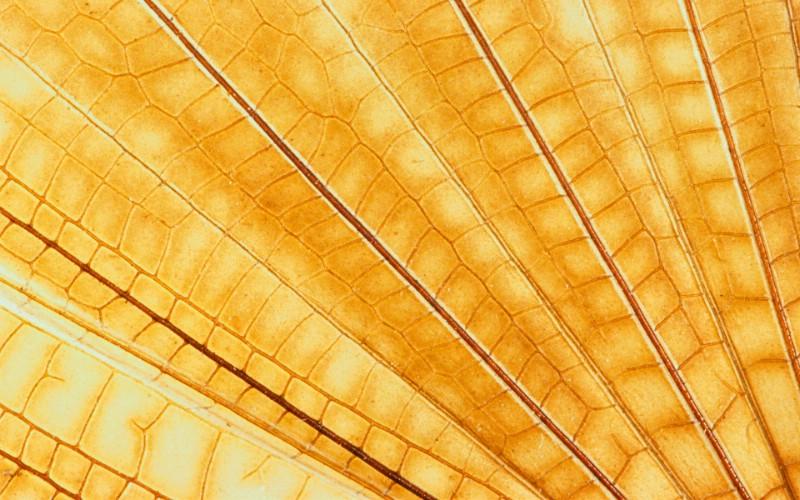 彩色羽毛和翅膀宽屏壁纸 1920x1200 壁纸7壁纸 彩色羽毛和翅膀宽屏壁壁纸 彩色羽毛和翅膀宽屏壁图片 彩色羽毛和翅膀宽屏壁素材 系统壁纸 系统图库 系统图片素材桌面壁纸