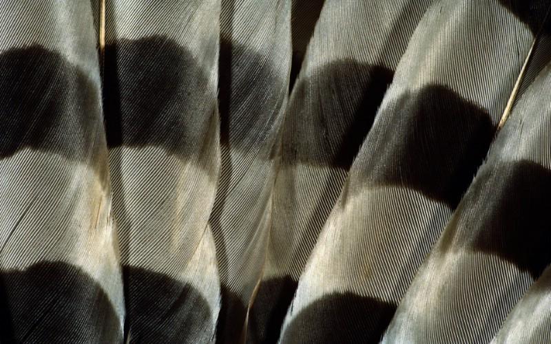 彩色羽毛和翅膀宽屏壁纸 1920x1200 壁纸9壁纸 彩色羽毛和翅膀宽屏壁壁纸 彩色羽毛和翅膀宽屏壁图片 彩色羽毛和翅膀宽屏壁素材 系统壁纸 系统图库 系统图片素材桌面壁纸