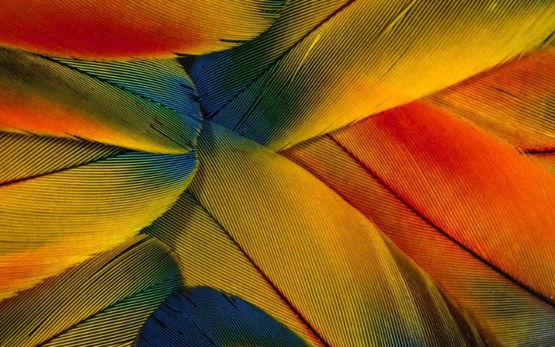 彩色羽毛和翅膀宽屏壁纸 1920x1200 壁纸11壁纸 彩色羽毛和翅膀宽屏壁壁纸 彩色羽毛和翅膀宽屏壁图片 彩色羽毛和翅膀宽屏壁素材 系统壁纸 系统图库 系统图片素材桌面壁纸