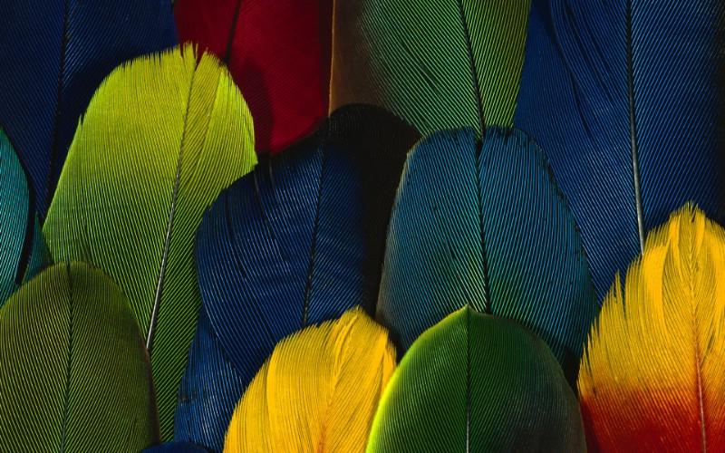 彩色羽毛和翅膀宽屏壁纸 1920x1200 壁纸13壁纸 彩色羽毛和翅膀宽屏壁壁纸 彩色羽毛和翅膀宽屏壁图片 彩色羽毛和翅膀宽屏壁素材 系统壁纸 系统图库 系统图片素材桌面壁纸