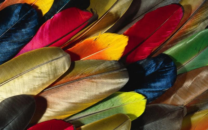 彩色羽毛和翅膀宽屏壁纸 1920x1200 壁纸15壁纸 彩色羽毛和翅膀宽屏壁壁纸 彩色羽毛和翅膀宽屏壁图片 彩色羽毛和翅膀宽屏壁素材 系统壁纸 系统图库 系统图片素材桌面壁纸