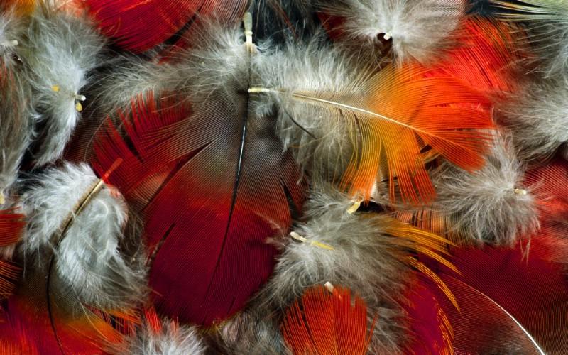 彩色羽毛和翅膀宽屏壁纸 1920x1200 壁纸18壁纸 彩色羽毛和翅膀宽屏壁壁纸 彩色羽毛和翅膀宽屏壁图片 彩色羽毛和翅膀宽屏壁素材 系统壁纸 系统图库 系统图片素材桌面壁纸