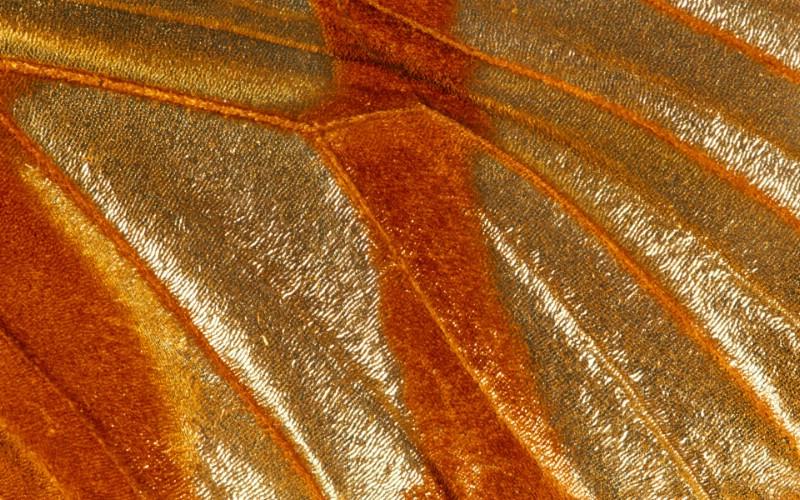 彩色羽毛和翅膀宽屏壁纸 1920x1200 壁纸25壁纸 彩色羽毛和翅膀宽屏壁壁纸 彩色羽毛和翅膀宽屏壁图片 彩色羽毛和翅膀宽屏壁素材 系统壁纸 系统图库 系统图片素材桌面壁纸