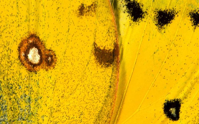 彩色羽毛和翅膀宽屏壁纸 1920x1200 壁纸26壁纸 彩色羽毛和翅膀宽屏壁壁纸 彩色羽毛和翅膀宽屏壁图片 彩色羽毛和翅膀宽屏壁素材 系统壁纸 系统图库 系统图片素材桌面壁纸