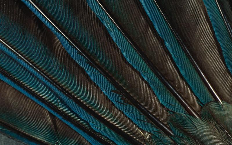 彩色羽毛和翅膀宽屏壁纸 1920x1200 壁纸28壁纸 彩色羽毛和翅膀宽屏壁壁纸 彩色羽毛和翅膀宽屏壁图片 彩色羽毛和翅膀宽屏壁素材 系统壁纸 系统图库 系统图片素材桌面壁纸