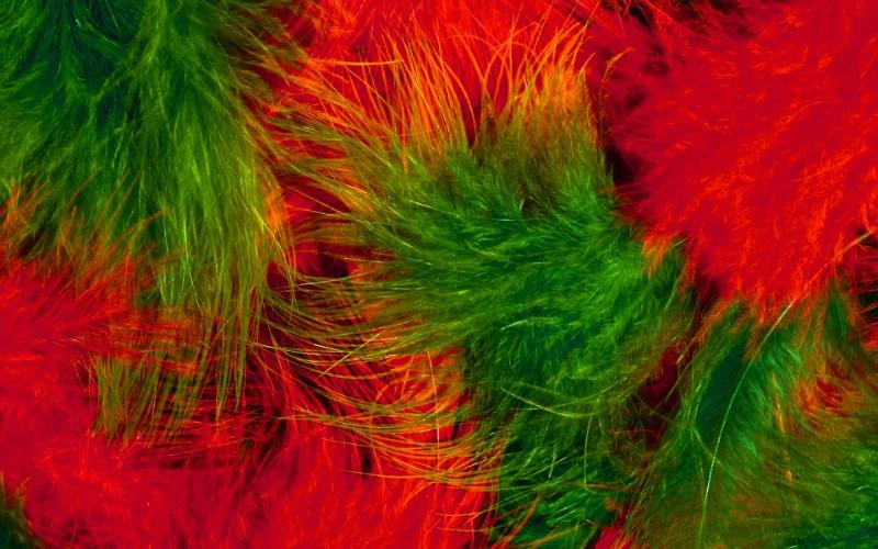 彩色羽毛和翅膀宽屏壁纸 1920x1200 壁纸40壁纸 彩色羽毛和翅膀宽屏壁壁纸 彩色羽毛和翅膀宽屏壁图片 彩色羽毛和翅膀宽屏壁素材 系统壁纸 系统图库 系统图片素材桌面壁纸