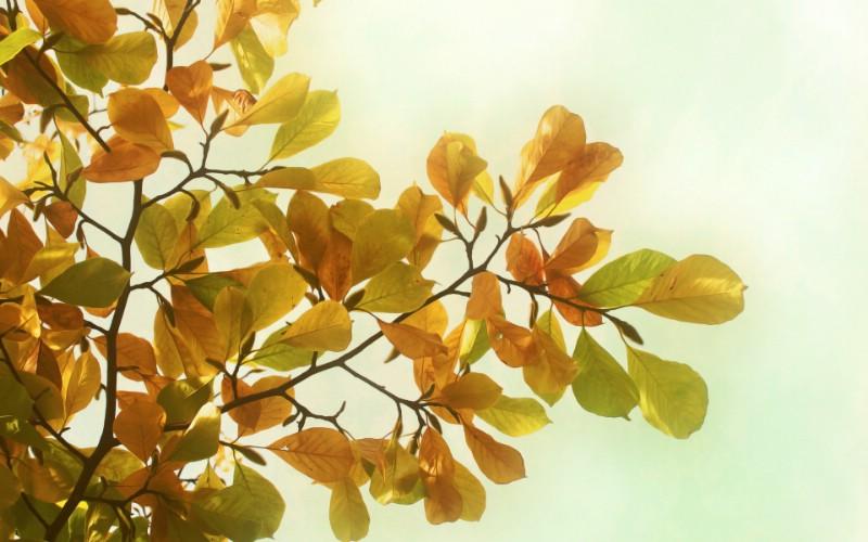 高清宽屏植物风光摄影壁纸 2009 09 26 壁纸22壁纸 高清宽屏植物风光摄影壁纸 高清宽屏植物风光摄影图片 高清宽屏植物风光摄影素材 系统壁纸 系统图库 系统图片素材桌面壁纸