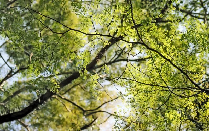 高清宽屏植物风光摄影壁纸 2009 09 26 壁纸77壁纸 高清宽屏植物风光摄影壁纸 高清宽屏植物风光摄影图片 高清宽屏植物风光摄影素材 系统壁纸 系统图库 系统图片素材桌面壁纸