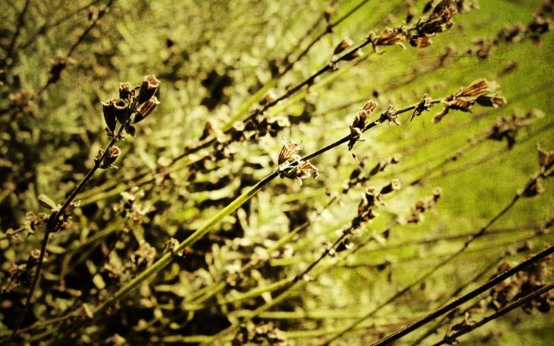 高清宽屏植物风光摄影壁纸 2009 09 26 壁纸72壁纸 高清宽屏植物风光摄影壁纸 高清宽屏植物风光摄影图片 高清宽屏植物风光摄影素材 系统壁纸 系统图库 系统图片素材桌面壁纸