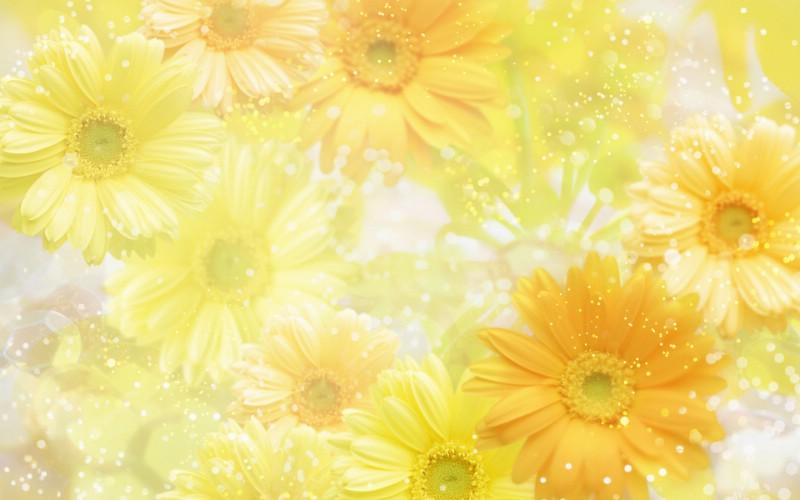 朦胧花朵柔美 宽屏壁纸 壁纸1壁纸 朦胧花朵柔美 宽屏壁壁纸 朦胧花朵柔美 宽屏壁图片 朦胧花朵柔美 宽屏壁素材 系统壁纸 系统图库 系统图片素材桌面壁纸