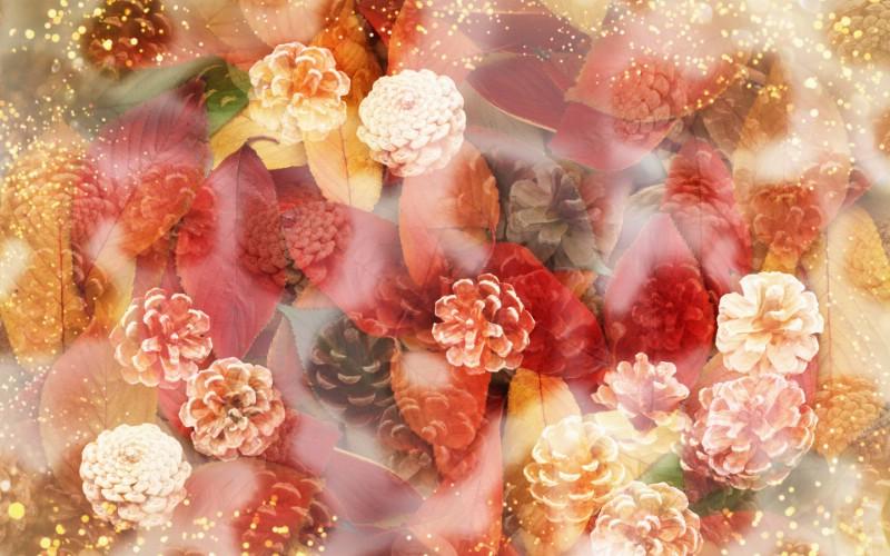 朦胧花朵柔美 宽屏壁纸 壁纸7壁纸 朦胧花朵柔美 宽屏壁壁纸 朦胧花朵柔美 宽屏壁图片 朦胧花朵柔美 宽屏壁素材 系统壁纸 系统图库 系统图片素材桌面壁纸