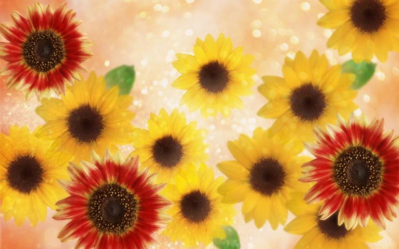 朦胧花朵柔美 宽屏壁纸 壁纸12壁纸 朦胧花朵柔美 宽屏壁壁纸 朦胧花朵柔美 宽屏壁图片 朦胧花朵柔美 宽屏壁素材 系统壁纸 系统图库 系统图片素材桌面壁纸