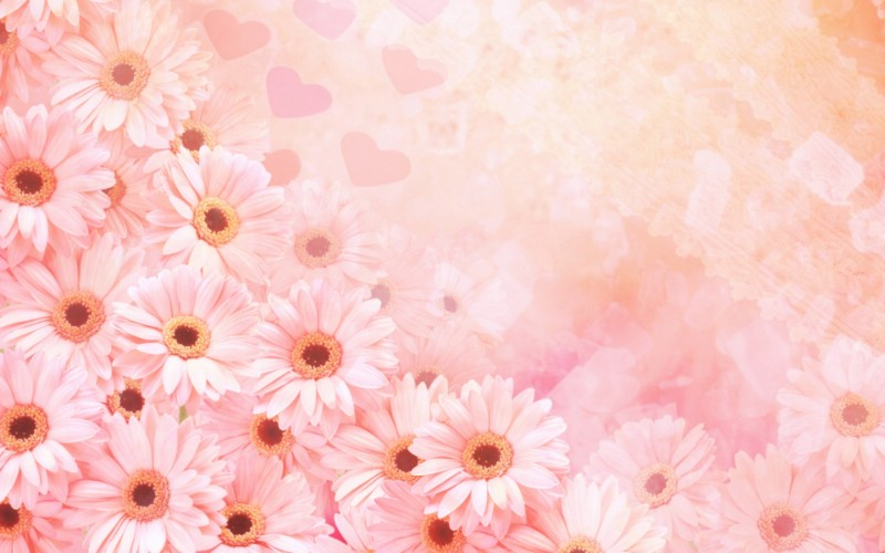 朦胧花朵柔美 宽屏壁纸 壁纸24壁纸 朦胧花朵柔美 宽屏壁壁纸 朦胧花朵柔美 宽屏壁图片 朦胧花朵柔美 宽屏壁素材 系统壁纸 系统图库 系统图片素材桌面壁纸