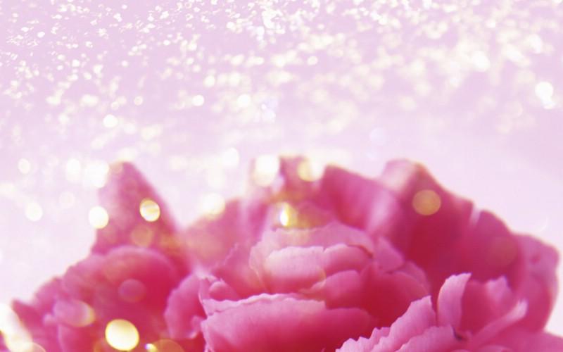 朦胧花朵柔美 宽屏壁纸 壁纸73壁纸 朦胧花朵柔美 宽屏壁壁纸 朦胧花朵柔美 宽屏壁图片 朦胧花朵柔美 宽屏壁素材 系统壁纸 系统图库 系统图片素材桌面壁纸