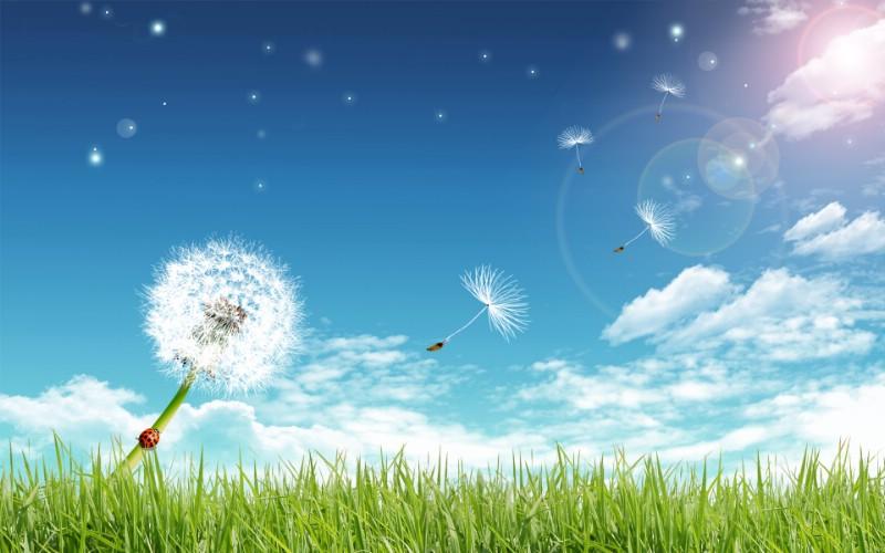 梦想家园 最美好的日子宽屏壁纸 壁纸12壁纸 梦想家园:最美好的日壁纸 梦想家园:最美好的日图片 梦想家园:最美好的日素材 系统壁纸 系统图库 系统图片素材桌面壁纸