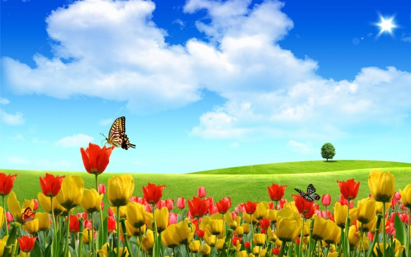梦想家园 最美好的日子宽屏壁纸 壁纸13壁纸 梦想家园:最美好的日壁纸 梦想家园:最美好的日图片 梦想家园:最美好的日素材 系统壁纸 系统图库 系统图片素材桌面壁纸