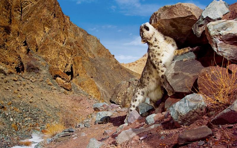 Snow Leopard自带 2 15壁纸 Snow Leopard自带壁纸 Snow Leopard自带图片 Snow Leopard自带素材 系统壁纸 系统图库 系统图片素材桌面壁纸