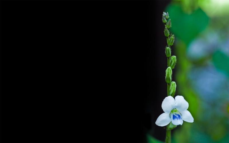 高清宽屏植物壁纸壁纸 高清宽屏植物壁纸壁纸 高清宽屏植物壁纸图片 高清宽屏植物壁纸素材 植物壁纸 植物图库 植物图片素材桌面壁纸