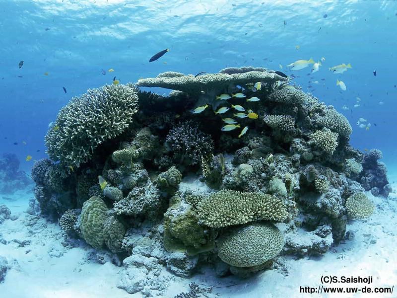 海底世界高清护眼壁纸 第8页 zol桌面壁纸