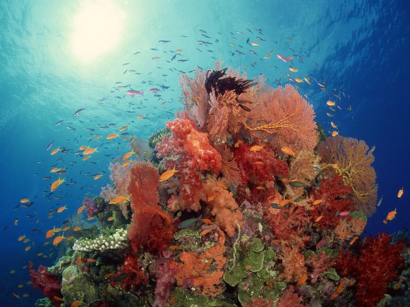 海底世界動態壁紙_山水動態壁紙手機壁紙