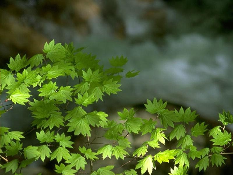 花草树木专辑壁纸,花草树木壁纸壁纸图片 植物壁纸 植物图