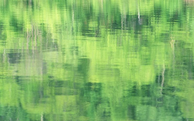 夏日气息 阳光水滴 清新绿叶高清壁纸 壁纸20壁纸 夏日气息:阳光水滴 壁纸 夏日气息:阳光水滴 图片 夏日气息:阳光水滴 素材 植物壁纸 植物图库 植物图片素材桌面壁纸