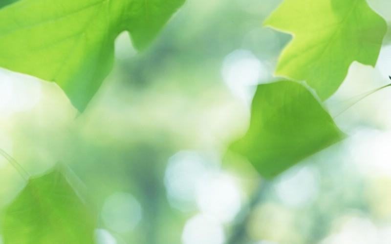 夏日气息 阳光水滴 清新绿叶高清壁纸 壁纸27壁纸 夏日气息:阳光水滴 壁纸 夏日气息:阳光水滴 图片 夏日气息:阳光水滴 素材 植物壁纸 植物图库 植物图片素材桌面壁纸