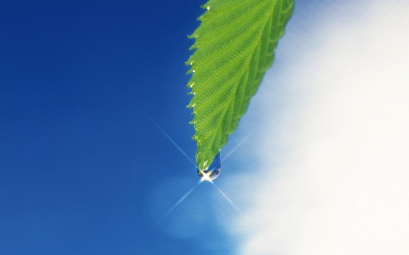 夏日气息 阳光水滴 清新绿叶高清壁纸 壁纸42壁纸 夏日气息:阳光水滴 壁纸 夏日气息:阳光水滴 图片 夏日气息:阳光水滴 素材 植物壁纸 植物图库 植物图片素材桌面壁纸
